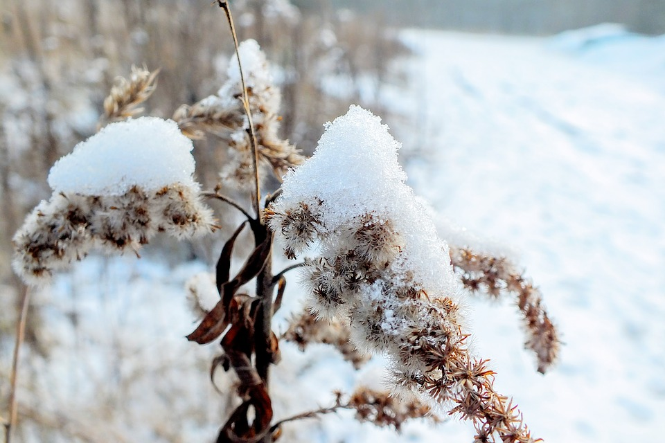 planten-inpakken-tegen-wintervorst