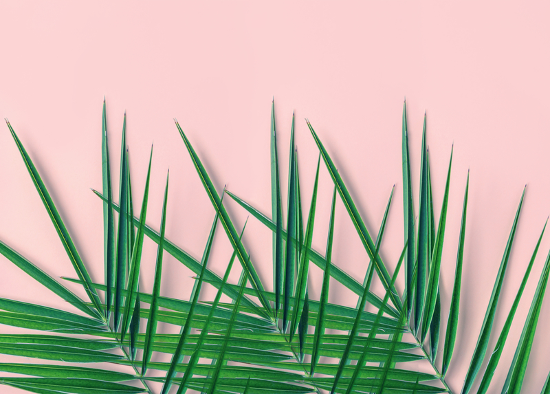 Tropical nature background. Spiky feathery green palm leaves on light pink wall background. Room house plant interior decoration urban jungle concept. Organic cosmetics spa wellness fashion backdrop
